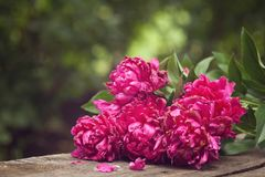Free Beautiful Bouquet Of Fading Peonies Stock Photos - 111381773
