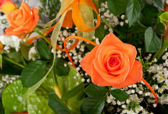 Beautiful bouquet of orange roses. Stock Photos