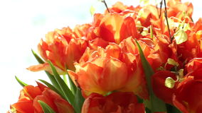 Beautiful bouquet of orange tulips quickly rotating. stock video
