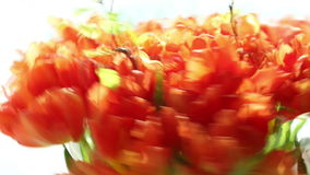 Beautiful bouquet of orange tulips quickly rotating. stock video footage