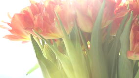 Beautiful bouquet of orange tulips in sunlight rotates. stock video footage