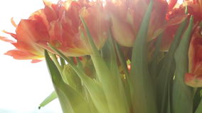 Beautiful bouquet of orange tulips in sunlight rotates. stock video