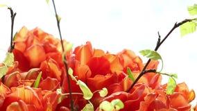 Beautiful bouquet of orange tulips turning. stock video footage