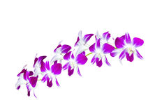 Beautiful bouquet orchid flowers stock photos