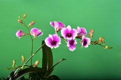 Beautiful bouquet Orchid on green background. Royalty Free Stock Photography