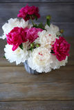 Beautiful bouquet of peonies Royalty Free Stock Photography