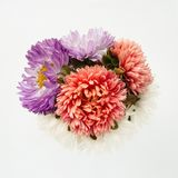 Beautiful bouquet of pink, lilac, white aster on a white background. Place for your design, text, etc royalty free stock images