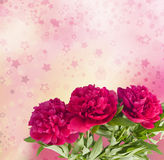 Beautiful bouquet of pink peonies. On the abstract background with bokeh effect Stock Images