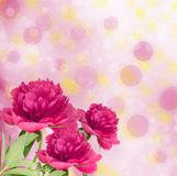 Beautiful bouquet of pink peonies. On abstract multicoloured background with blur bokeh Royalty Free Stock Image