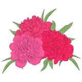 Beautiful bouquet of pink peonies with green leaves. Perfect background greeting cards and invitations to the wedding, birthday, m Royalty Free Stock Image