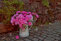 Beautiful bouquet of pink rose Pomponella flowers in old enamel aged weathered jug on stones and sandstone background royalty free stock image