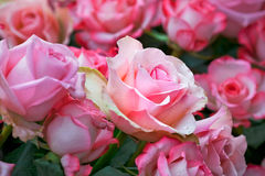 Beautiful bouquet of pink roses. Stock Photos
