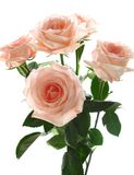 Beautiful bouquet of pink roses royalty free stock image