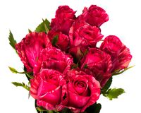 Beautiful bouquet of pink roses Royalty Free Stock Photography