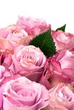 Beautiful bouquet of pink roses. Isolated on white background Royalty Free Stock Photo
