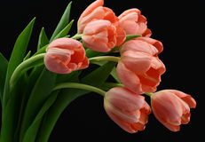 Beautiful bouquet of pink tulips Stock Photo