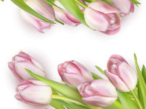 Beautiful bouquet of pink tulips. EPS 10 Royalty Free Stock Image