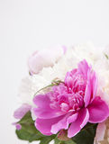 Beautiful bouquet of pink and white peonies Royalty Free Stock Photography