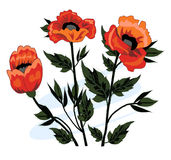 Beautiful bouquet of poppies Royalty Free Stock Image