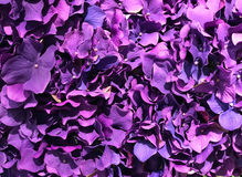 Beautiful bouquet purple flower for background, close-up. Abstract of beautiful purple bouquet flower for background Royalty Free Stock Photography