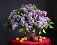 Beautiful bouquet of purple lilacs in the jar. Royalty Free Stock Image