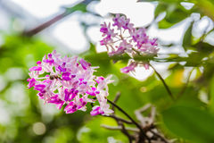 Beautiful bouquet of purple orchids Royalty Free Stock Images