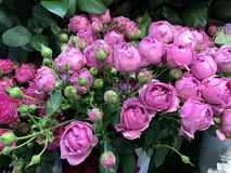 Beautiful bouquet of purple roses. In a flowers shop, pleasure for every woman stock photo