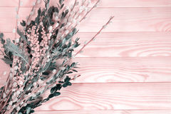 Beautiful bouquet of pussy willow and mimizy on a wooden background. Pale pink tone Royalty Free Stock Photos