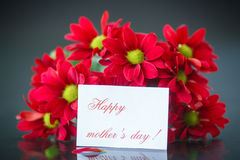 Beautiful bouquet of red chrysanthemums Stock Images
