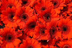 Beautiful Bouquet of Red Flowers in a Flower Shop Stock Images