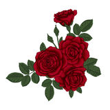 Beautiful bouquet with red roses and leaves. Floral arrangement. Design greeting card and invitation of the wedding, birthday, Valentine`s Day, mother`s day Stock Image