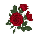 Beautiful bouquet with red roses and leaves. Floral arrangement. Design greeting card and invitation of the wedding, birthday, Valentine`s Day, mother`s day Stock Photos