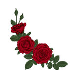 Beautiful bouquet with red roses and leaves. Floral arrangement. Design greeting card and invitation of the wedding, birthday, Valentine`s Day, mother`s day Stock Images