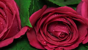 Beautiful bouquet of red roses is rotated. Valentine's Day Beautiful bouquet of red roses is rotated stock footage