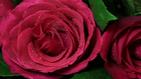 Beautiful bouquet of red roses is rotated. Valentine's Day Beautiful bouquet of red roses is rotated stock video footage