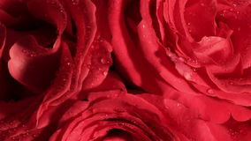 Beautiful bouquet of red roses with a rotating. Valentine's Day Beautiful bouquet of red roses with a rotating reverse stock footage