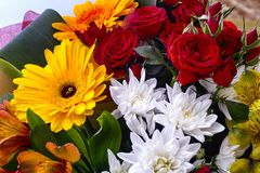 Beautiful bouquet with red roses, white chrysanthemums and gerbe Stock Images