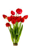 Beautiful bouquet of red  tulips Royalty Free Stock Photography
