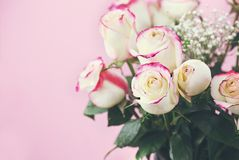 Red and White Rose Bouguet. Beautiful bouquet of  red and white roses with baby`s breath against a pink background. Selective focus on roses in foreground with Royalty Free Stock Photo