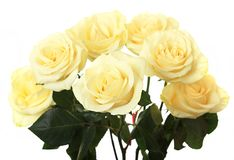 Beautiful bouquet of roses. Royalty Free Stock Photos