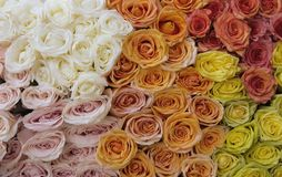 Beautiful bouquet of roses Stock Photography