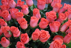 Beautiful bouquet of roses. Delicate beautiful flowers for your favorite ladies Stock Image
