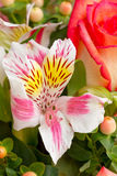 Beautiful bouquet of roses Stock Photos