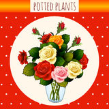 Beautiful bouquet of roses, gift flyer Stock Photo