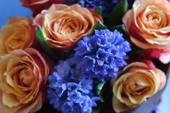 A beautiful bouquet of roses and hyacinths will appeal to every woman. His royal fragrance will conquer every. Wonderful royalty free stock photo