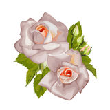 Beautiful bouquet of roses isolated on white. Stock Photography