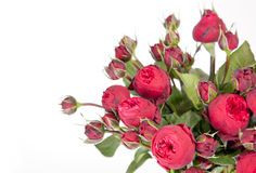 Beautiful bouquet of roses Peony Stock Images