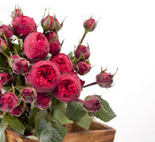 Beautiful bouquet of roses Peony Royalty Free Stock Photography