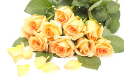 Beautiful bouquet of roses and petals Royalty Free Stock Photo