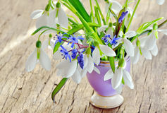Beautiful bouquet snowdrops in a vase Royalty Free Stock Image